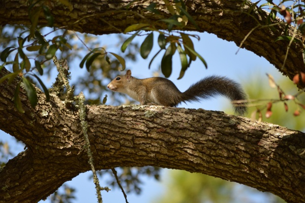 A squirrel in Francis Park, Photo by Lee Dupraw